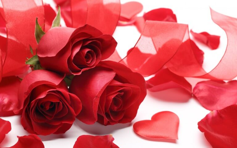 Happy Rose Day 2017 Wishes Wallpaper Messages And Whatsapp Sms