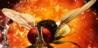 Eega 2 TV series with Salmaan Khan as Lead - Rajamouli's Eega 2 on TV series
